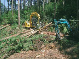 路網系利用間伐